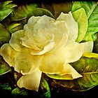 Antique Gardenia Blossom by MotherNature