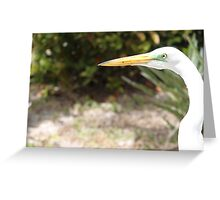 White bird, yellow beak Greeting Card