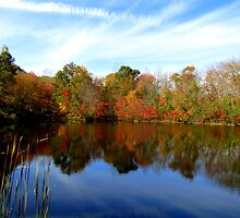 Autumn Beauty in Ledyard, CT by Debbie Robbins