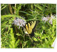 Tiger-eye Butterfly Poster