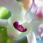 Morning Orchid by Renee Hubbard Fine Art Photography