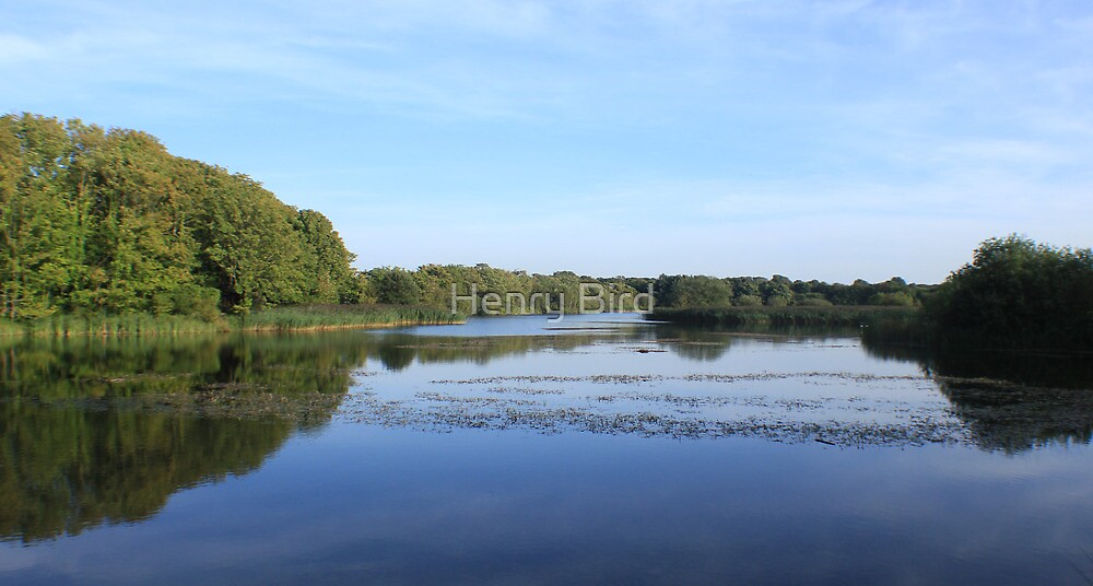 Cosmeston Lakes by Henry Bird