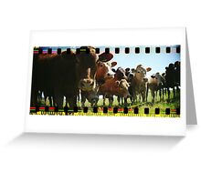 Cow Line Greeting Card