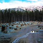 200 Sled Dogs  by ChelcieSPorter