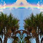 Rainbow Palms by Rob Atkinson