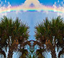 Rainbow Palms by Rob Atkinson
