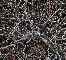 Twisted Limbs by Rob Atkinson