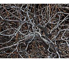 Twisted Limbs Photographic Print