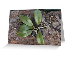 Oak sprig with acorn Greeting Card