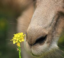 Stop and smell the flowers  by Donovan wilson
