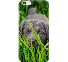 Hiding in the grass iPhone Case/Skin