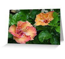 Hibiscus companions Greeting Card