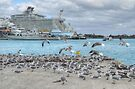 Seagulls at Prince George Wharf in Nassau Harbour, The Bahamas by Jeremy Lavender Photography