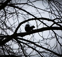 Squirrel Business by amieanderson
