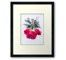 rose in the snow Framed Print