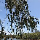 Aussie Bush Sticks: Gum Leaves by aussiebushstick