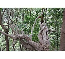 Aussie Bush Sticks: Roots Photographic Print