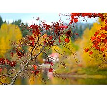 Fall Maples Photographic Print