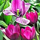 Flora Family by Rob Atkinson