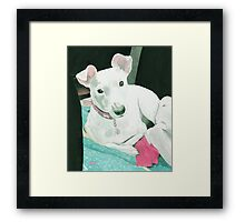 Sully the Jack Russell Terrier Framed Print