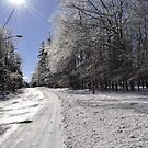 Glistening ice on the trees by Penny Rinker