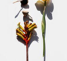 Australian Still Life 1 by papillonphoto