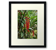 Wild Heliconia Flower in the Borneo Jungle  Framed Print