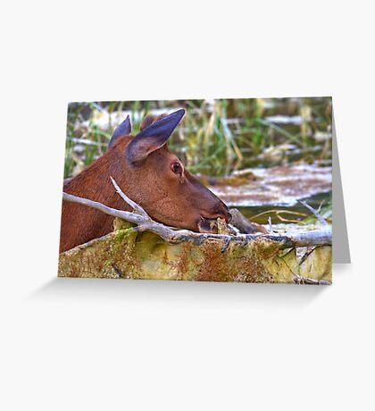 Tasty Swamp Scum! Greeting Card