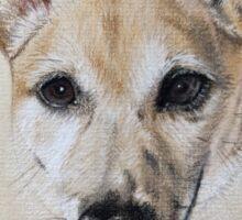 Maye - the beautiful little Jack Russell Terrier Sticker