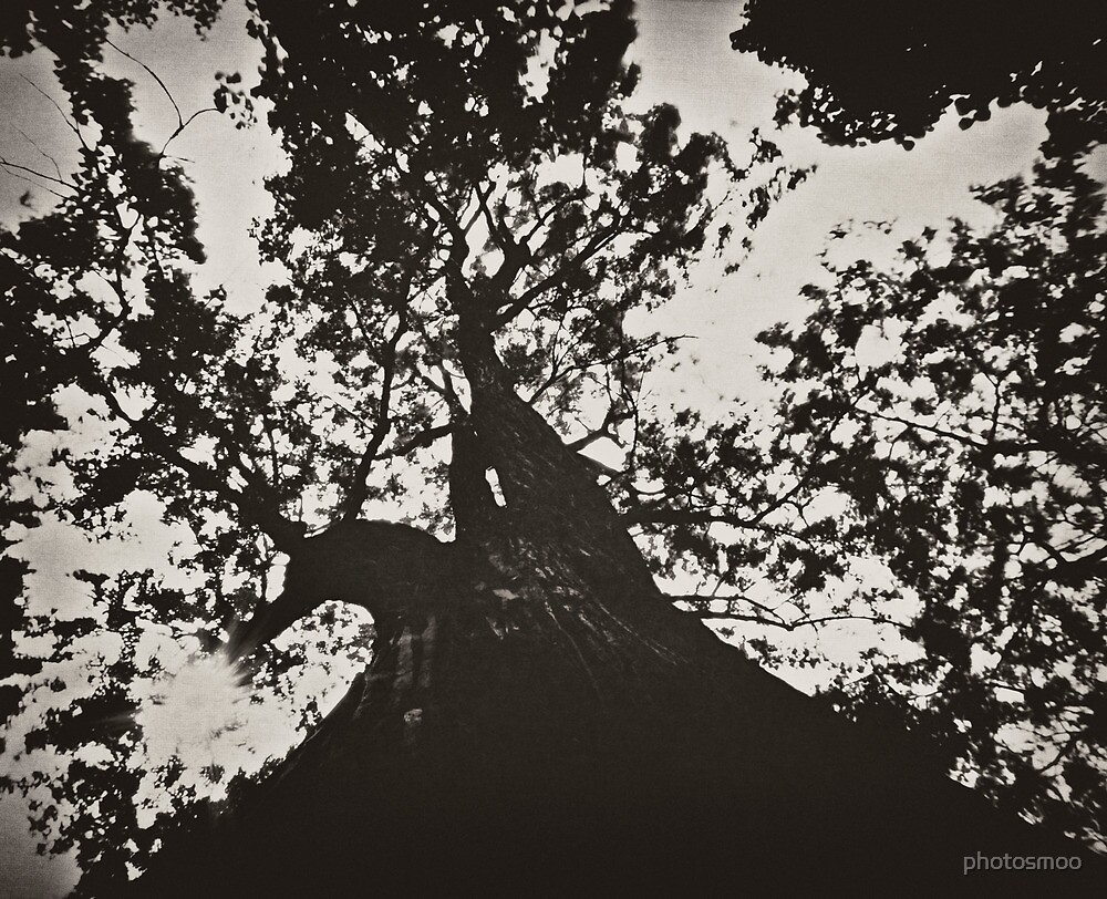Tree by photosmoo