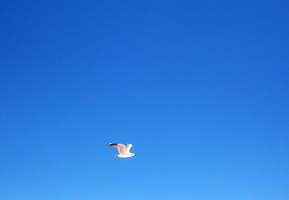Seagull One - 27 10 12 by Robert Phillips