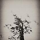 Tree by photosmoo