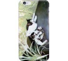 cat colony iPhone Case/Skin