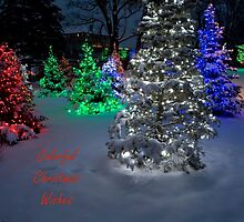 Colorful Christmas Wishes by Adam Bykowski