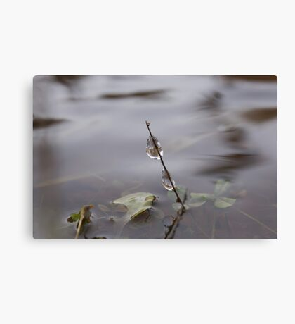Icy - In the middle on freezing stream Canvas Print