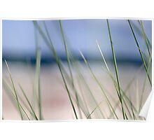 Beach grass abstract Poster