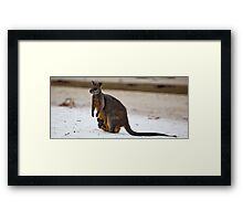 Beach Visitor - Green Patch Beach, NSW Framed Print
