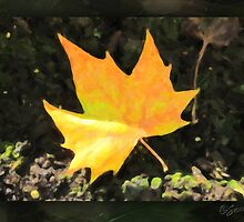 another autumn leaf... by Karen  Securius