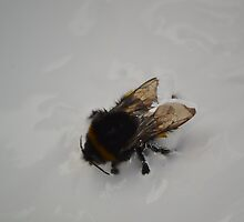 The Unfortunate Bee Stuck in a Paint Tin by The Tid