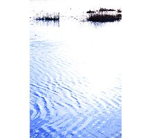 calm rippled water surface with rushes at sunset Photographic Print