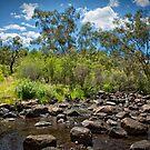 John Forrest National Park // 2 by Evan Jones