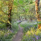 The Perfect English Woodland by James Stevens