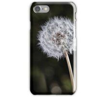 Dandelion in garden 2 iPhone Case/Skin