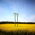 Rapeseed field with blue sky 02 by Phillip Shannon