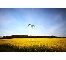 Rapeseed field with blue sky 02 Photographic Print