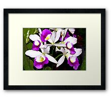 Purple and white pond orchids Framed Print