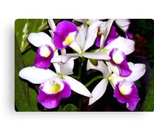 Purple and white pond orchids Canvas Print