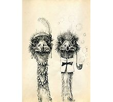 Mr. and Mrs. Ostrich Photographic Print
