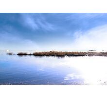 swans swimming on calm fogy waters Photographic Print