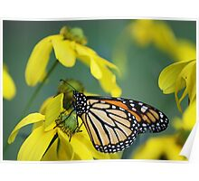 Monarch and Yellow Flowers Poster